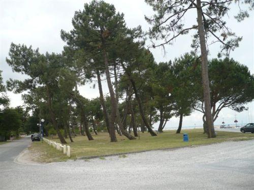 les arbres situés à droite vont disparaître