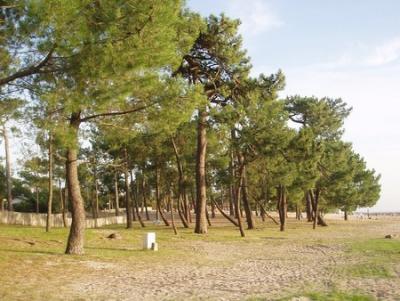 la plage boisée du BETEY fin XXème siècle