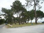 la plage boisée du Betey vue du port