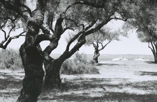 Tamaris à côté du port du Betey