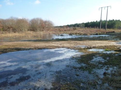 Matoucat hiver 2013