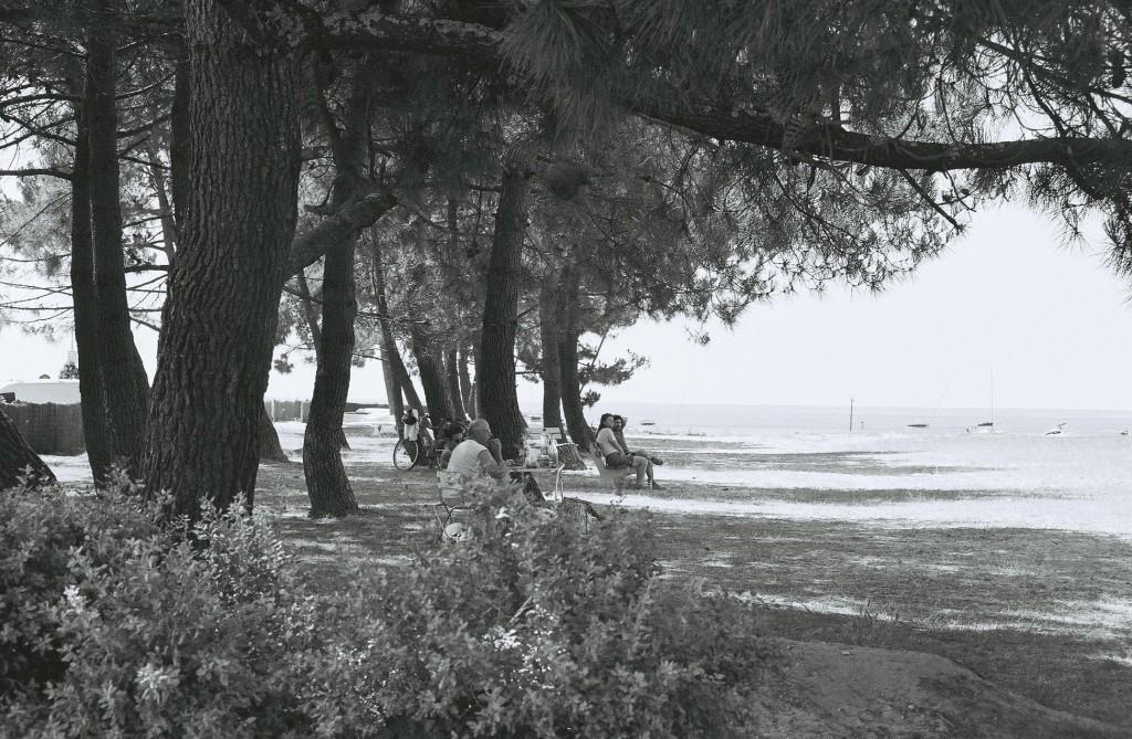 pins bordant la plage du Broustey