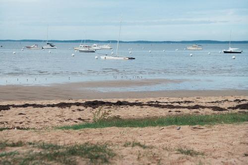 plage au Bétey algues vertes et varech