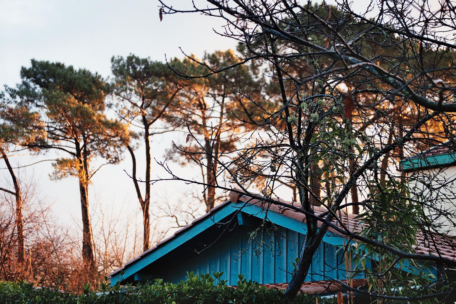 pins du Bétey avenue du puit artésien vu d'un jardin