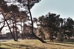 Plage boisée du Bétey avril 2 015