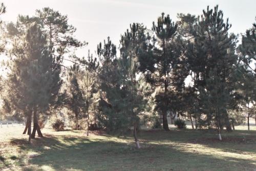 Plage boisée du Bétey avril 2015