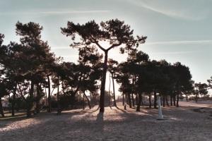 arbre remarquable sur la plage du Bétey mars  2015