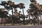 Plage boisée du Bétey avril  215