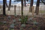Plants fixant la dune