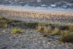 laisse de mer plage nord du Bétey 2016