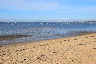 créer une zone de refuge su la plage du Bétey, rive droite