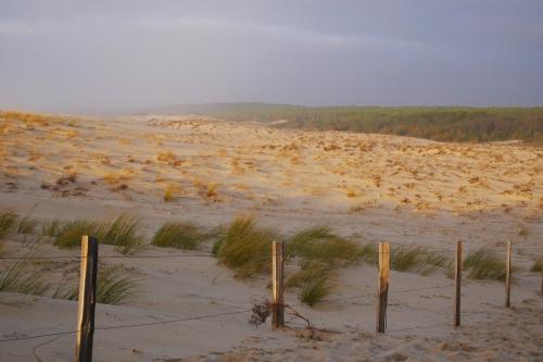entre forêt et dune au Porge
